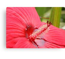 Red Hibiscus Canvas Print