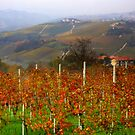 Autumn in the Langhe  by annalisa bianchetti