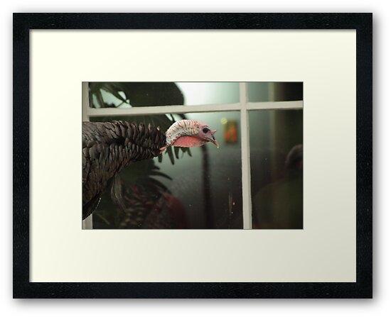 Peeping Tom by Thomas Murphy