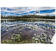 Lily Pond Madness Poster