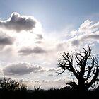 Tree  by 650soul