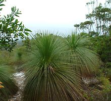 grass tree waltz by GrowingWild