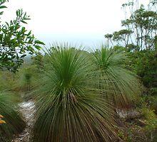 grass tree waltz by GrowingWild
