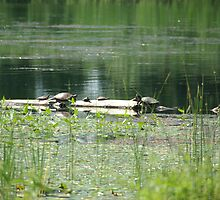 turtles 1 by jolynncreations