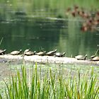 turtles 2 by jolynncreations