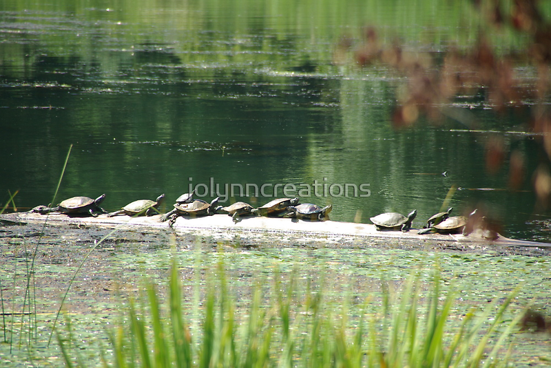 turtles  by jolynncreations