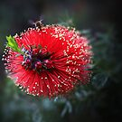 Bottlebrush and the Bee by Jill Fisher