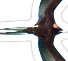 Galapagos Frigate in flight Sticker