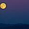 Moonlight Feels Right! (all Media) ($20 Red Bubble Voucher)