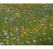 English Meadow # 4 Photographic Print