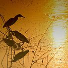 GOLDEN REFLECTION by PALLABI ROY