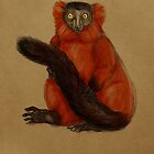 Ruffed Lemur by Jenji
