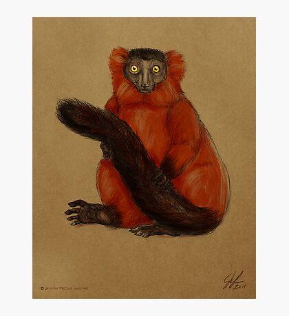 Ruffed Lemur Photographic Print