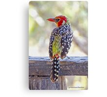 Red-and-Yellow Barbet Canvas Print