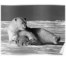 BW USA Alaska mother polar bear 1970s Poster