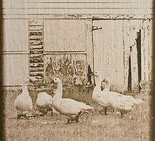 Country Geese by Dawn Crouse