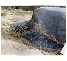 Turtle Bay Poster