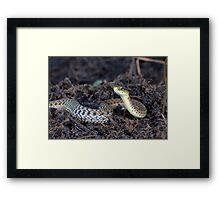 Eastern Garter Snake - Checkered Coloration Framed Print
