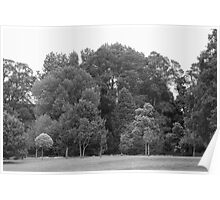 Trees at Bute Park, Cardiff - BW Poster