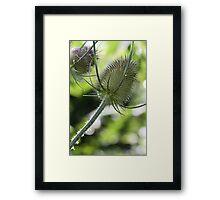 Thistle? Framed Print
