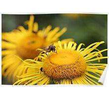 Mini sunflower Poster