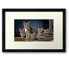 Cat hangout Framed Print
