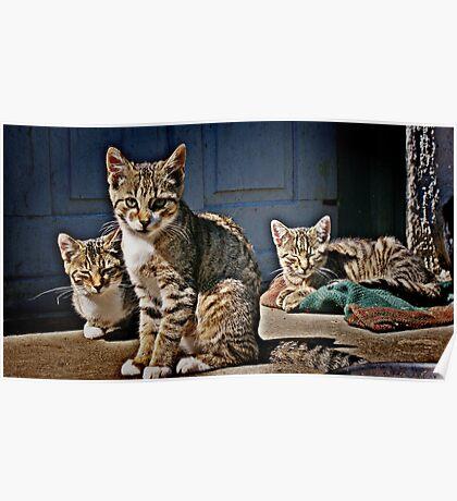 Cat hangout Poster