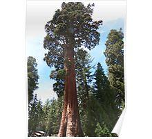 Sequoia National Park, California Poster