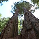 Twin Giant Sequoias by GreyFeather