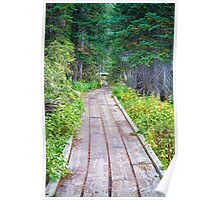 Colorado Rocky Mountain Forest Path Poster