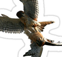 Kestrel Falcon Battle For The Grasshopper iPhone Case and Clothing Sticker
