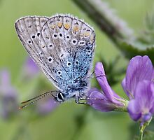 Mister Blue Loves Purple by Jo Nijenhuis