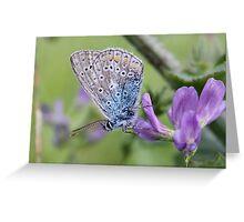 Mister Blue Loves Purple Greeting Card