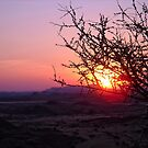 African Glow by globeboater