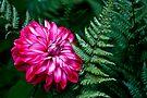 Flower and Fern by Adam Bykowski
