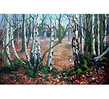 Birches, Epping Forest Photographic Print