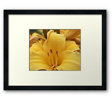 Yellow With Droplets Framed Print