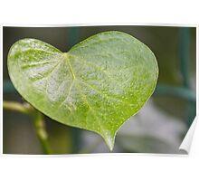 Green Heart Poster