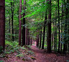 Forest Walk by Colin Metcalf
