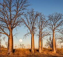 Kimberley Boabs at Sunset by Mieke Boynton