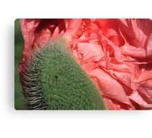 Silk revealed: giving up on thorns Canvas Print