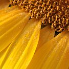 sunny pollen by yvesrossetti