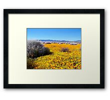 Poppy Patch Framed Print