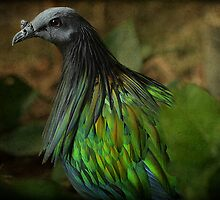 I am proud of the lovely color of my feathers.... by Johanna26