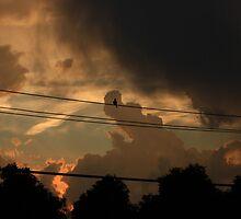 A Dove Awaiting by Adam Kuehl
