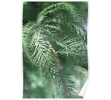 A Quiet Moment with a Conifer Poster