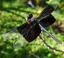 Libélula - Dragonfly by Bernhard Matejka