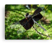 Libélula - Dragonfly Canvas Print