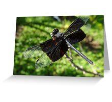 Libélula - Dragonfly Greeting Card