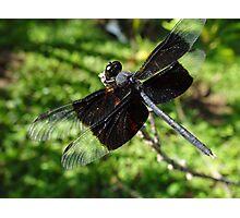 Libélula - Dragonfly Photographic Print